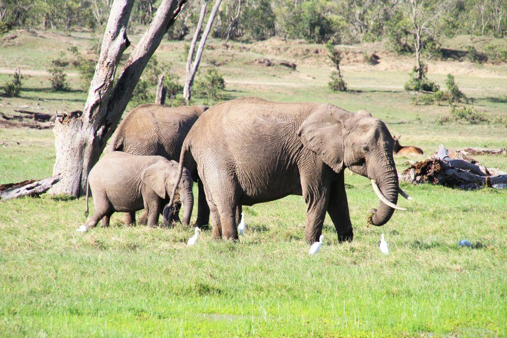 甜水野生动物保护区位于肯尼亚尼罗河,在河的另一边是水牛泉保护区。面积165平方公里,距离内罗毕350公里,从内罗毕和到这里从海拔800到1230米的高度。 尼罗河经由埃及横穿整个保护区,河流两边生长着茂密的棕树林,是动物的生命之泉。这里到处是金合欢的树,河边的森林,荆棘丛和草地植被。自然宁静,这里明显是远离人类生活污染。除了保护区常见的动物外,有特别五大兽:细纹斑马,长颈羚,网纹长颈鹿,索马里鸵鸟,剑羚是其他保护区所没有的。