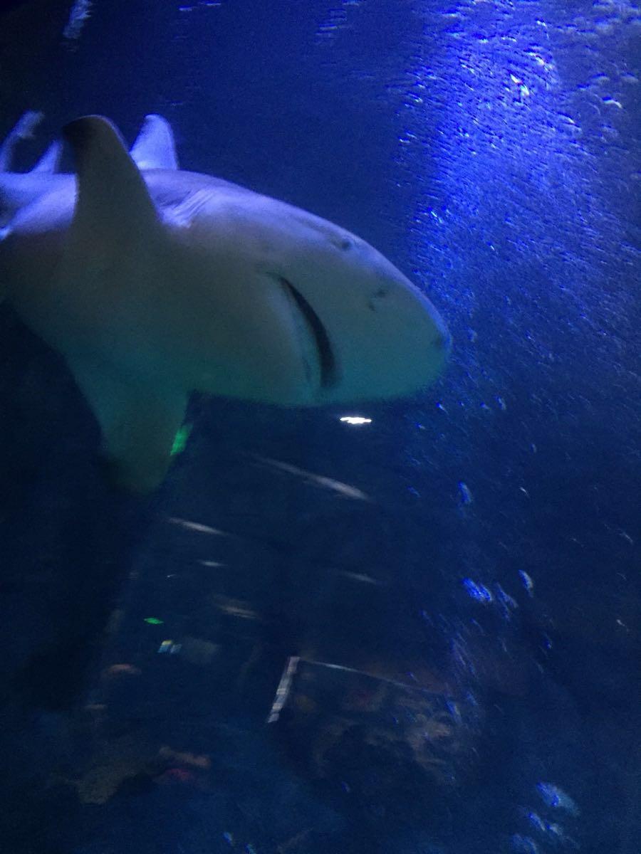 好多大型海洋深水动物