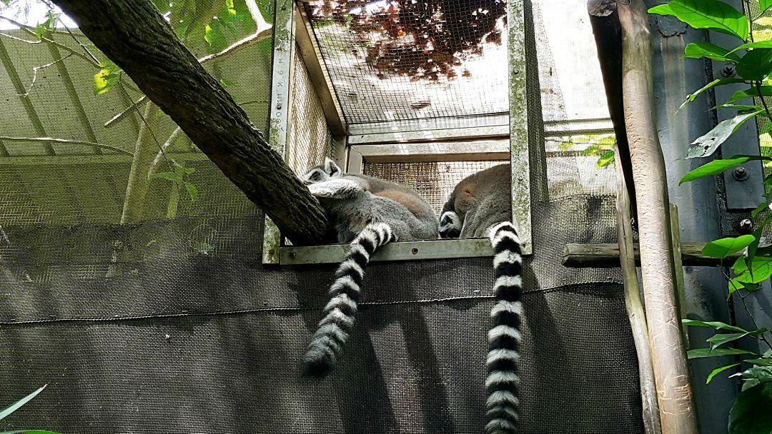 【携程攻略】新加坡新加坡动物园好玩吗,新加坡新加坡