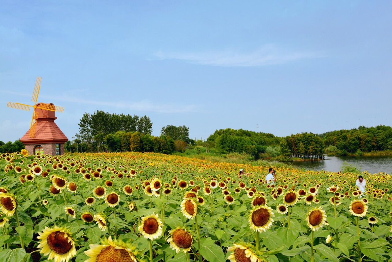 杭州湾海上花田攻略方特玩芜湖去图片