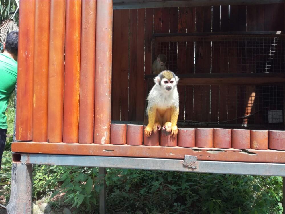 峰峡野生动物园景点