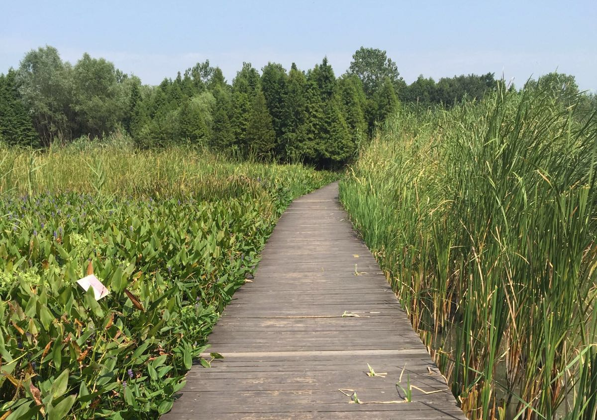 湿地公园里是有个新开的植物园,由于时间关系没能进去看看,稍有遗憾.
