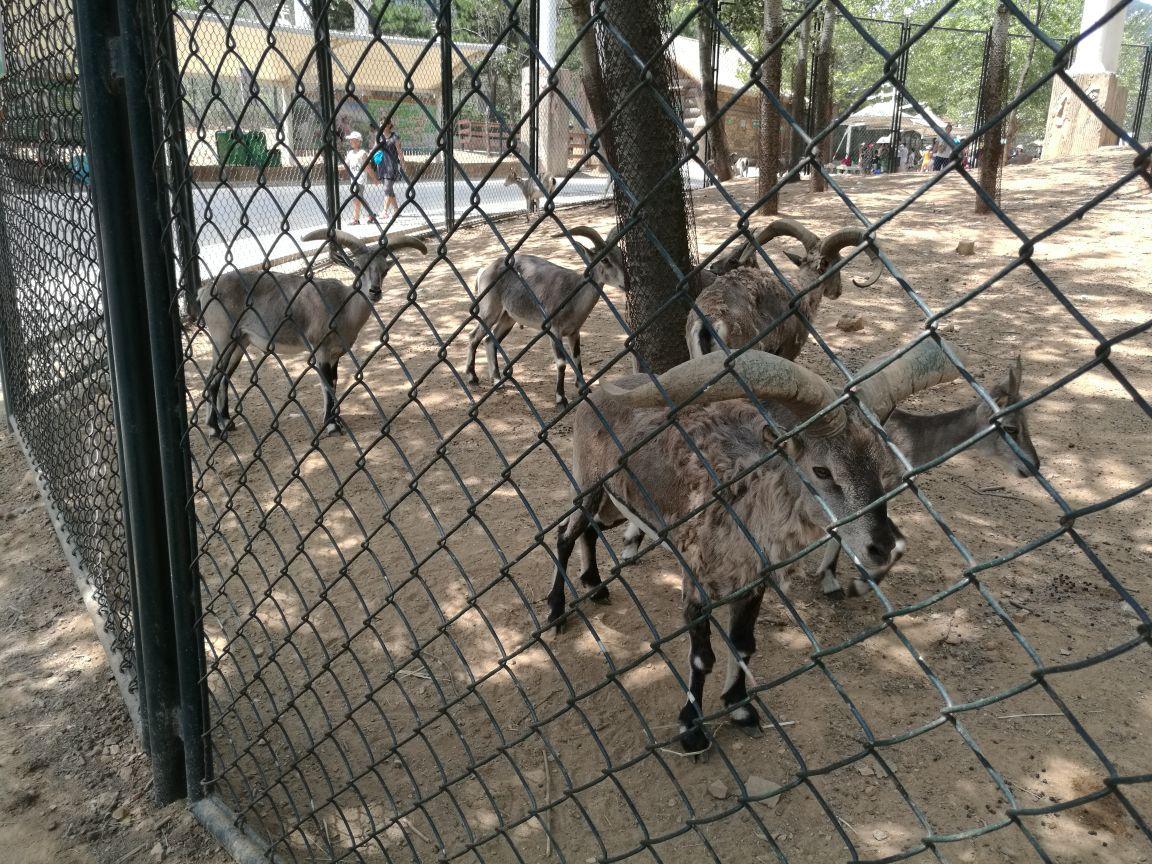 大连森林动物园