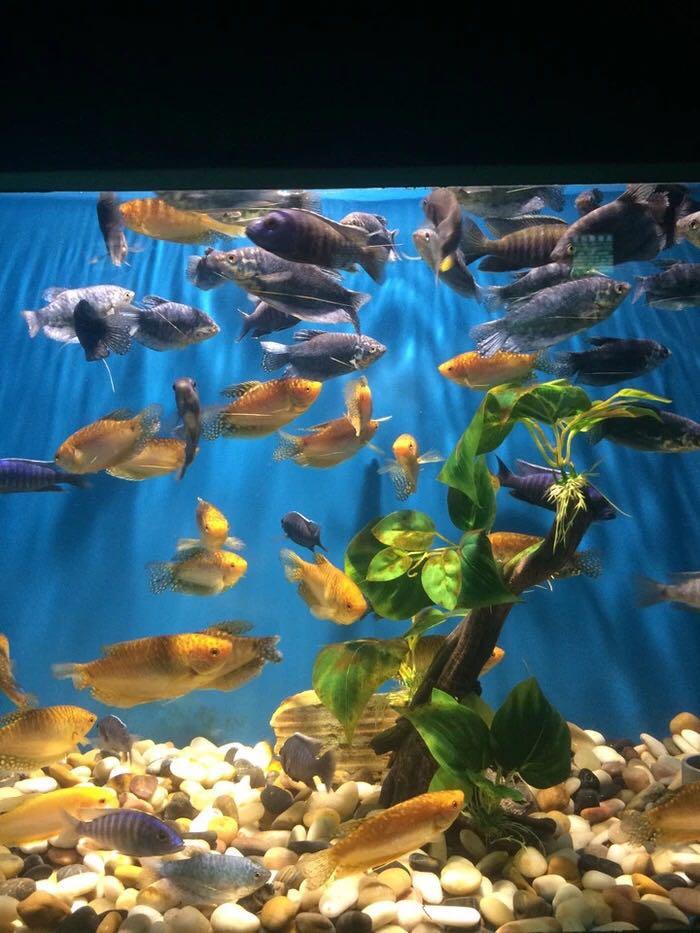 壁纸 海底 海底世界 海洋馆 水族馆 桌面 700_933 竖版 竖屏 手机