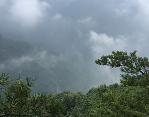 2019红河谷森林公园攻略,眉县红河谷森林公园a攻略v攻略213门票图片