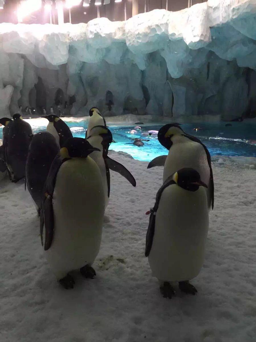 的最爱是小企鹅和小熊猫,总喊着要抱回家里养 2016-08-28有用 ( 2)