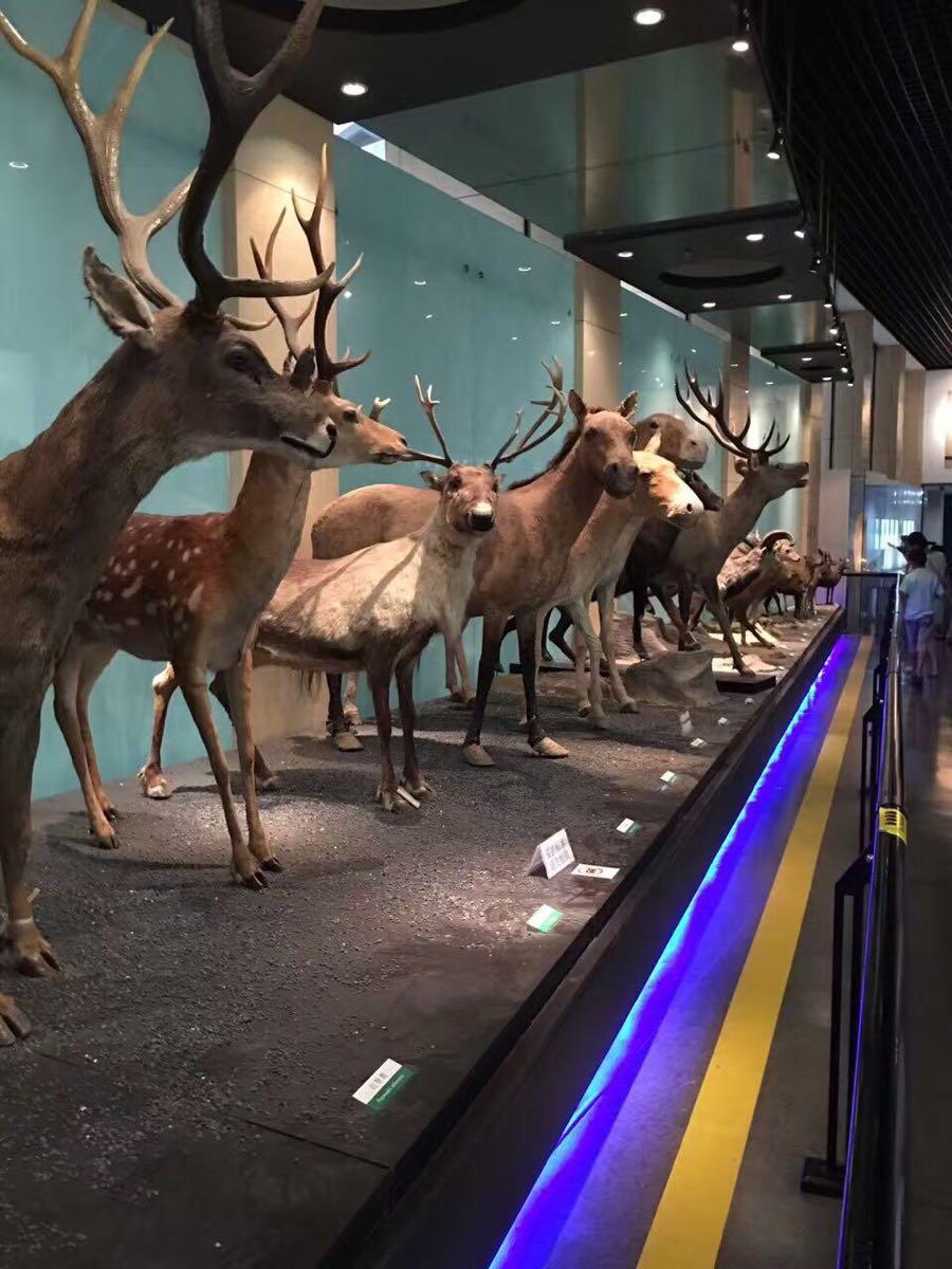 【携程攻略】北京中国动物博物馆好玩吗