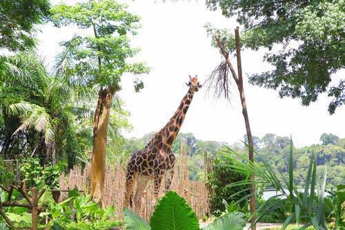 新加坡动物园