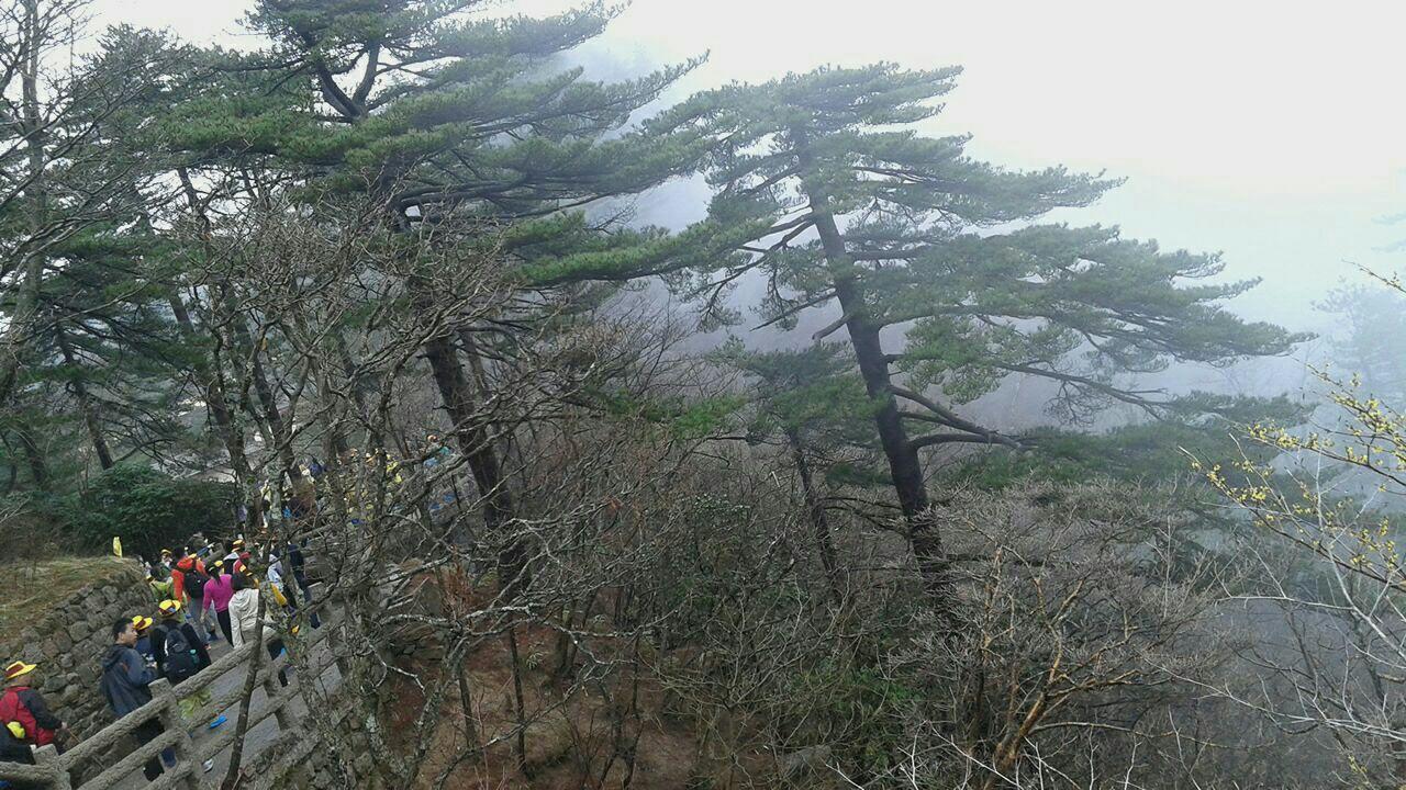 壁纸 风景 树 松 松树 1280_720