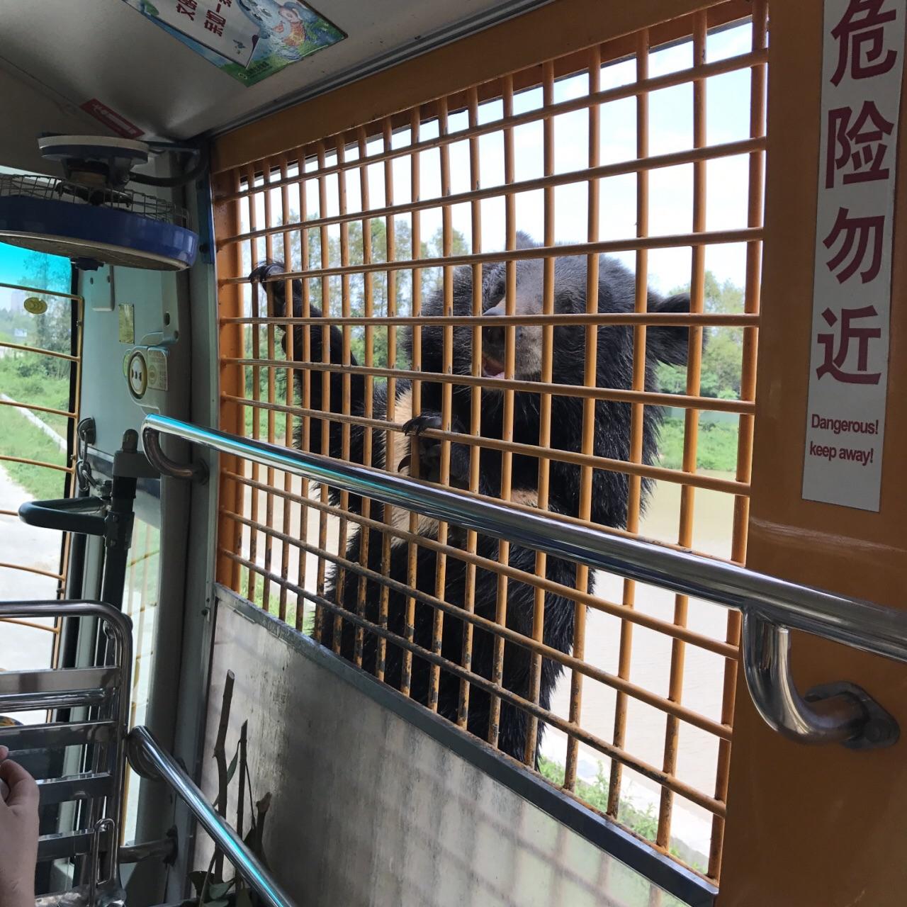 野生动物园里的马戏团十分精彩,40元一位的投喂游览车