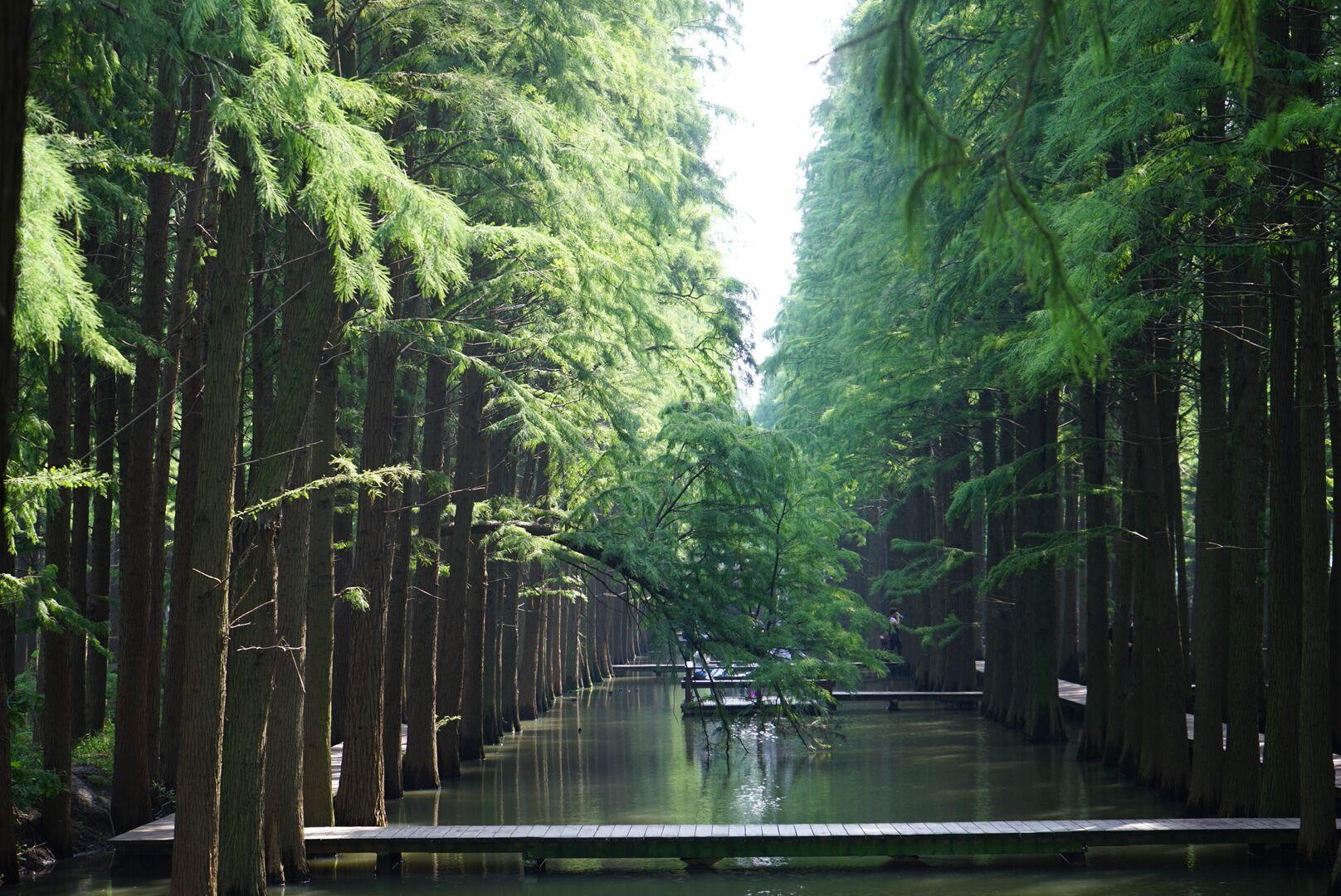 高清水上森林