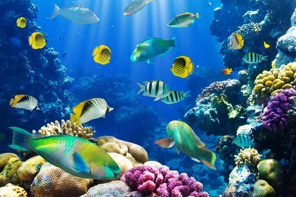 对于孩子们来说,这里是极佳的海洋知识科普世界,还可欣赏精彩的美人鱼