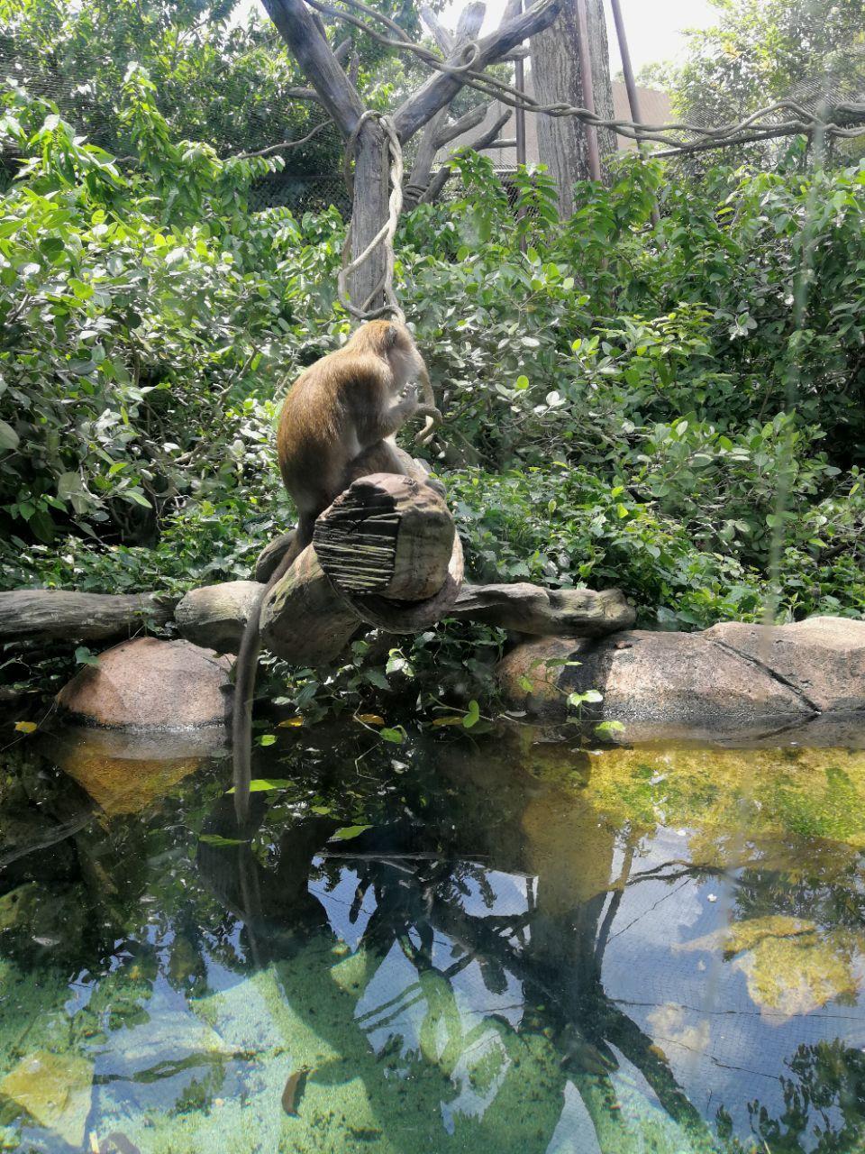 2018新加坡动物园_旅游攻略_门票_地址_游记点评,旅游
