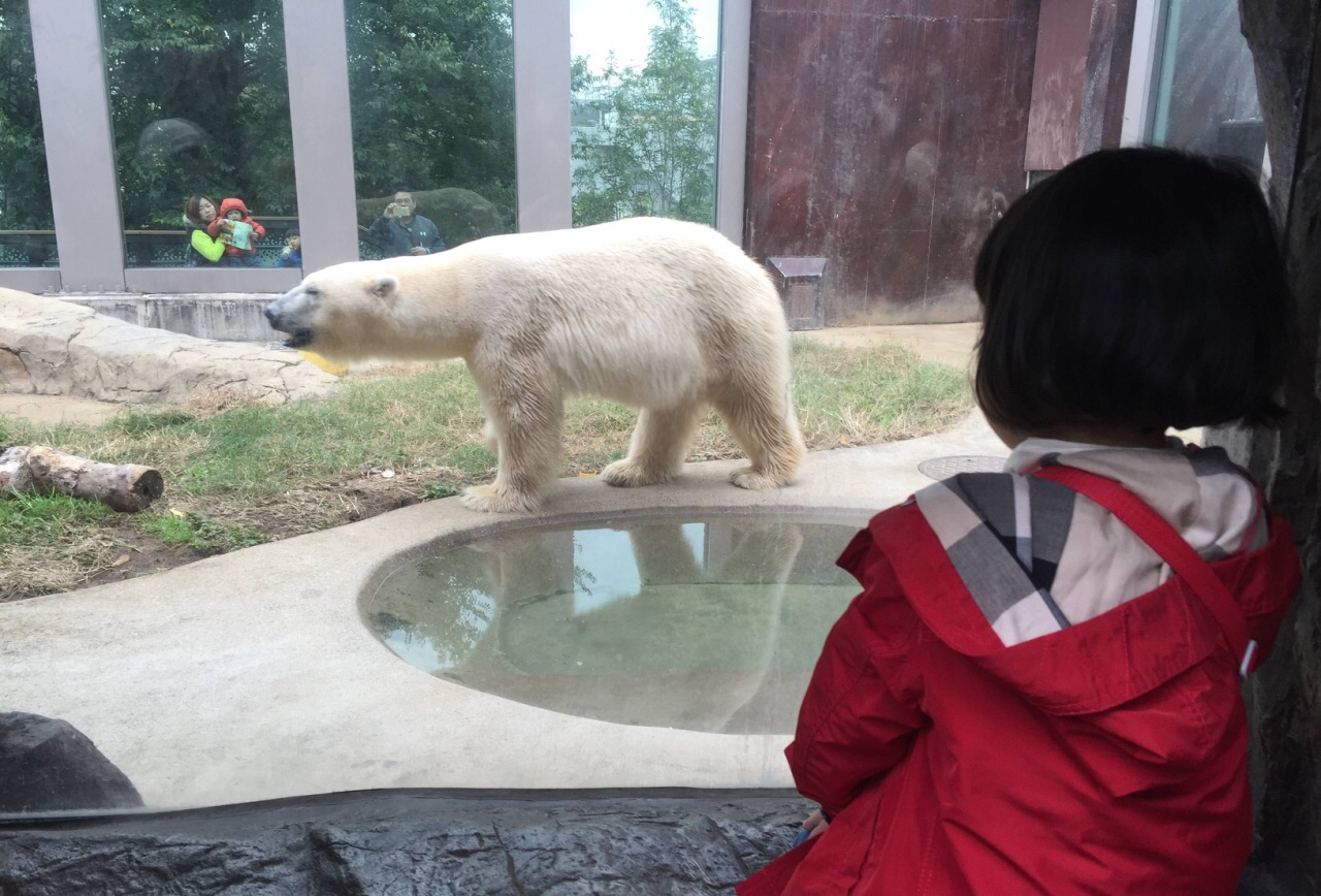 蛋妹说这个动物园像个大森林,可以很近距离看小动物,各种动物的圈养都