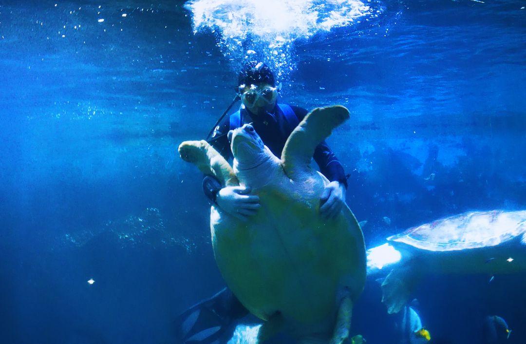 壁纸 海底 海底世界 海洋馆 水族馆 桌面 1080_706