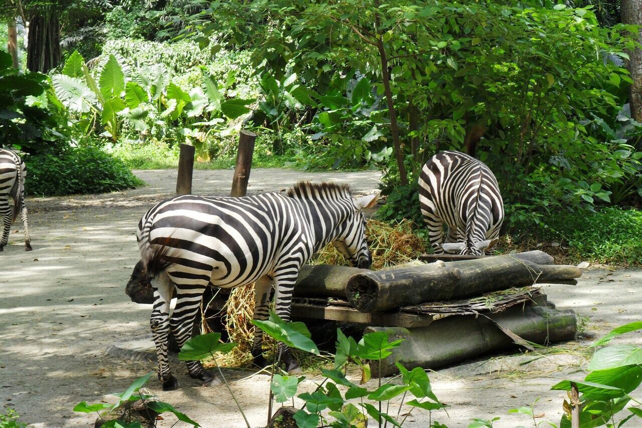 园的动物们太太太幸福了,是没有围栏的,和游客们都是用一些天然屏障