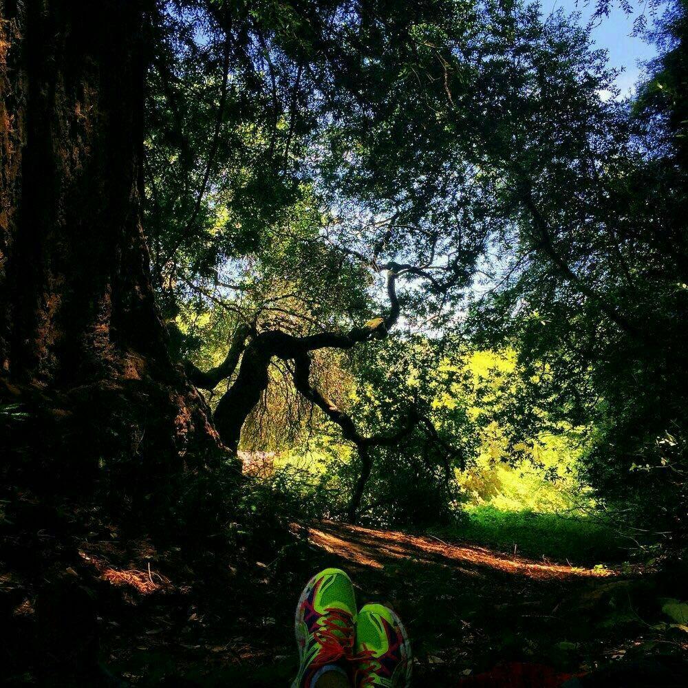 红木公园旅游景点攻略图