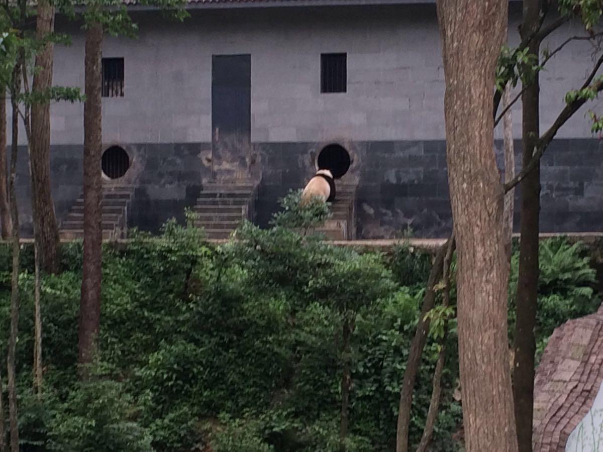 【携程攻略】四川雅安碧峰峡野生动物园好玩吗