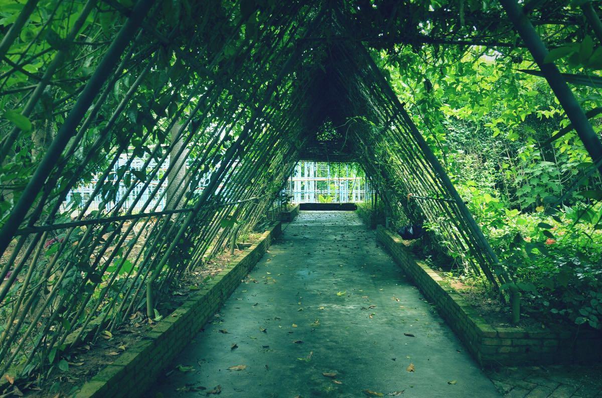 茂名森林公园图片