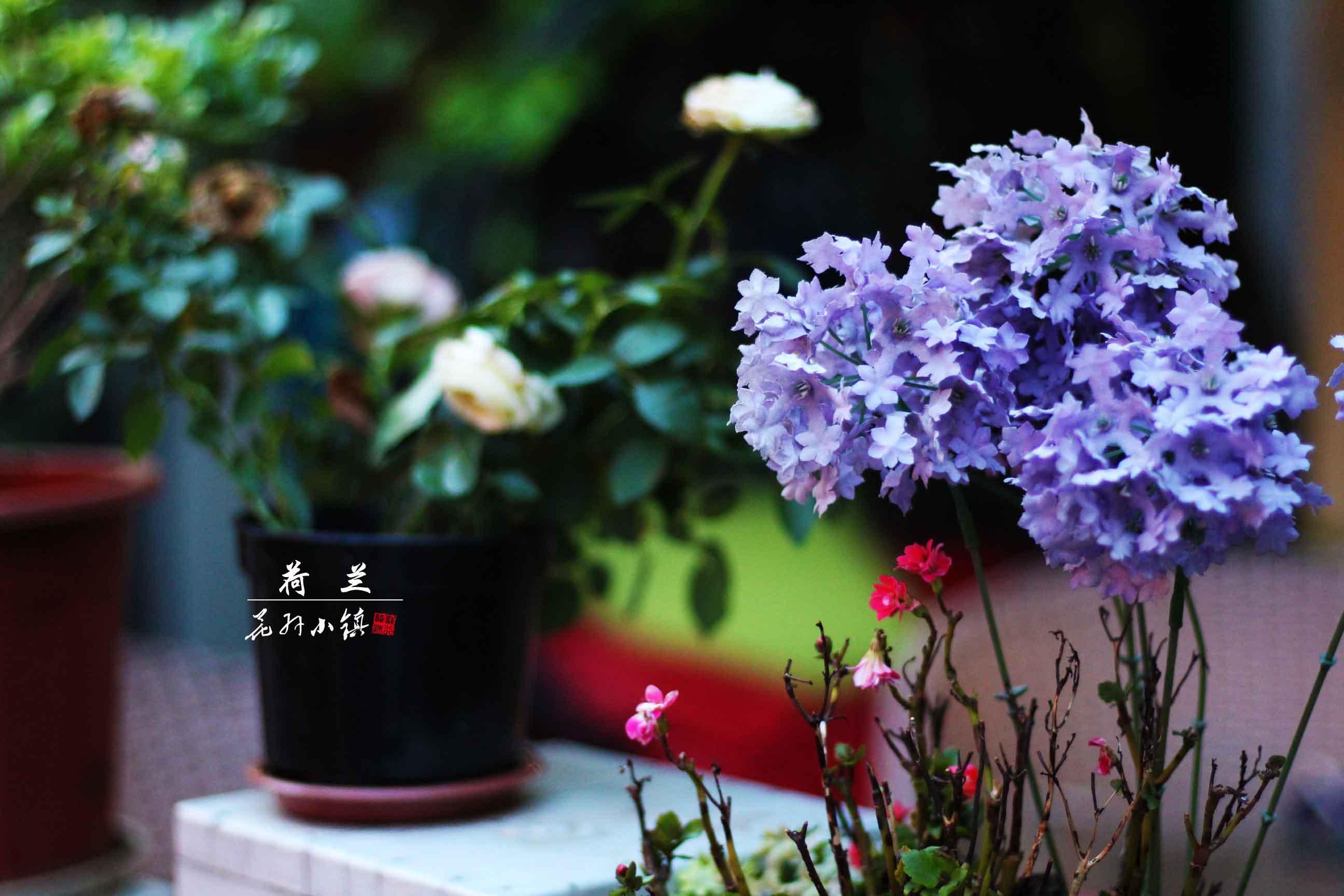 花卉店面設計圖片