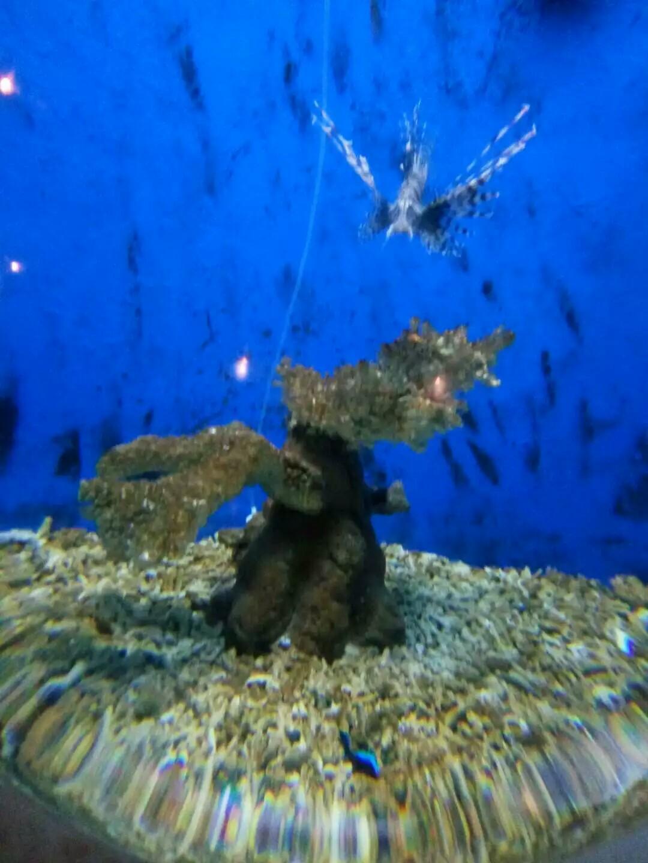 壁纸 海底 海底世界 海洋馆 水族馆 桌面 1080_1440 竖版 竖屏 手机