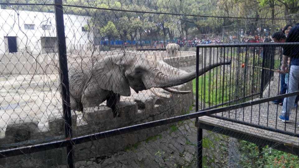 【携程攻略】湖北武汉动物园景点,每次到武汉,都要去