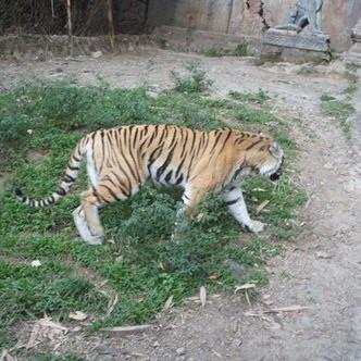 雅加达拉古南动物园好玩吗,雅加达拉古南动物园景点样