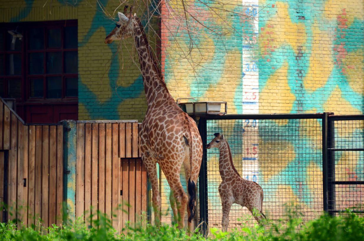 北京动物园是中国最大的动物园之一,每年接待中外游客600多万人次