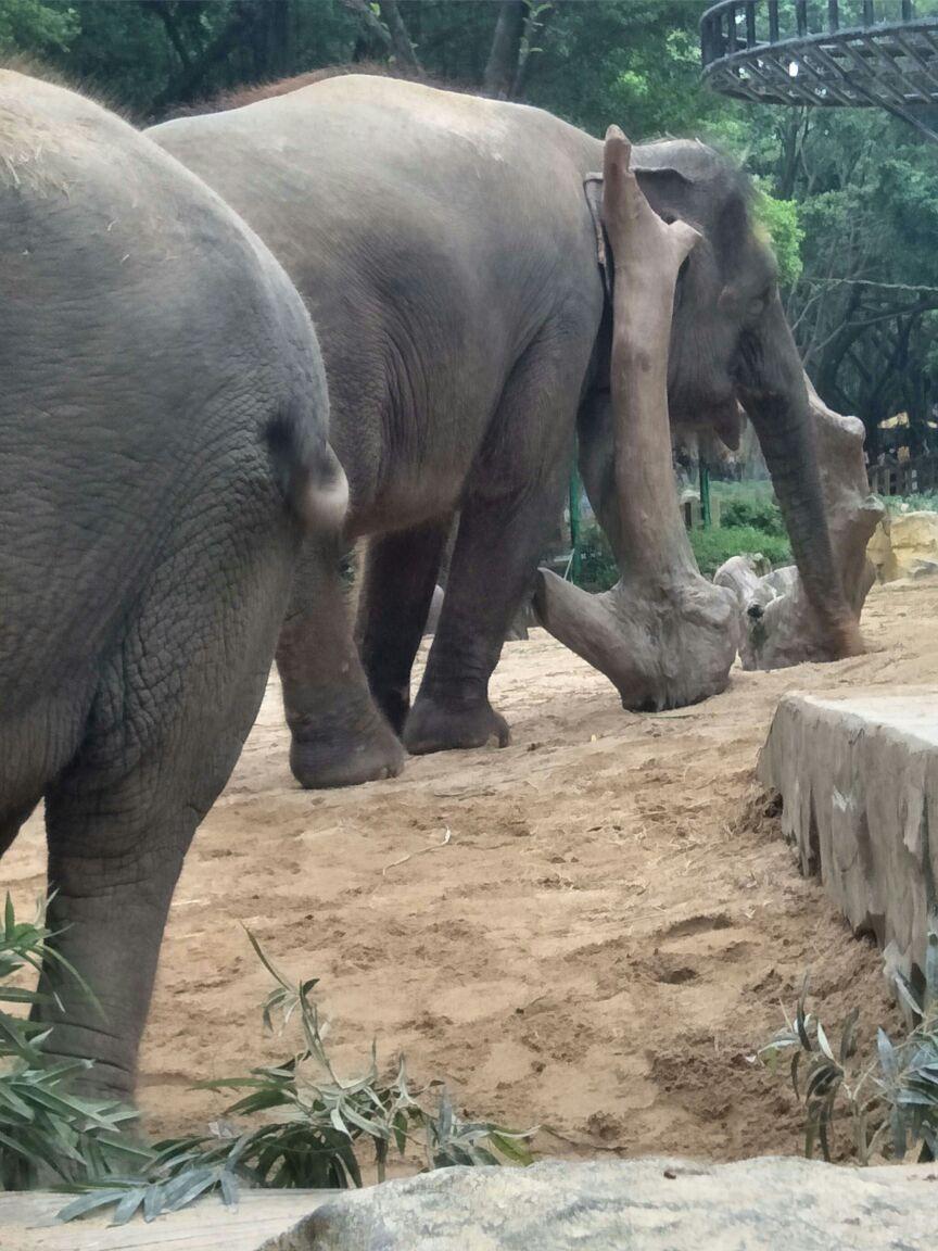 能够欣赏到其它国家的动物,走到动物园里,仿佛去到了非洲看到大笨象
