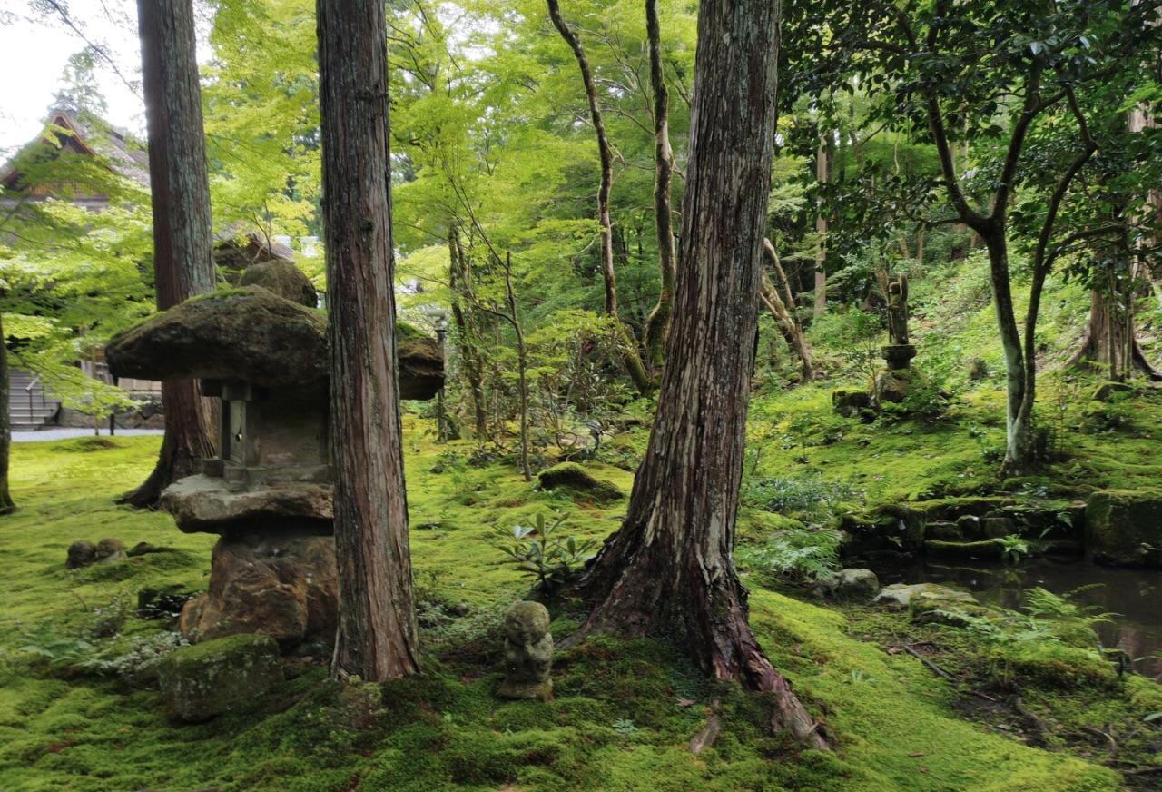 壁纸 风景 森林 树 桌面 1280_872