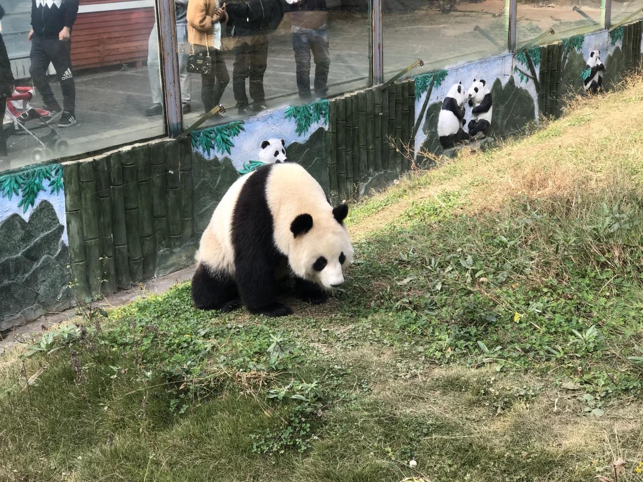 壁纸 大熊猫 动物 狗 狗狗 1280_960