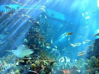北京海洋馆位于北京动物园内,是目前全世界最大的内陆水族馆.