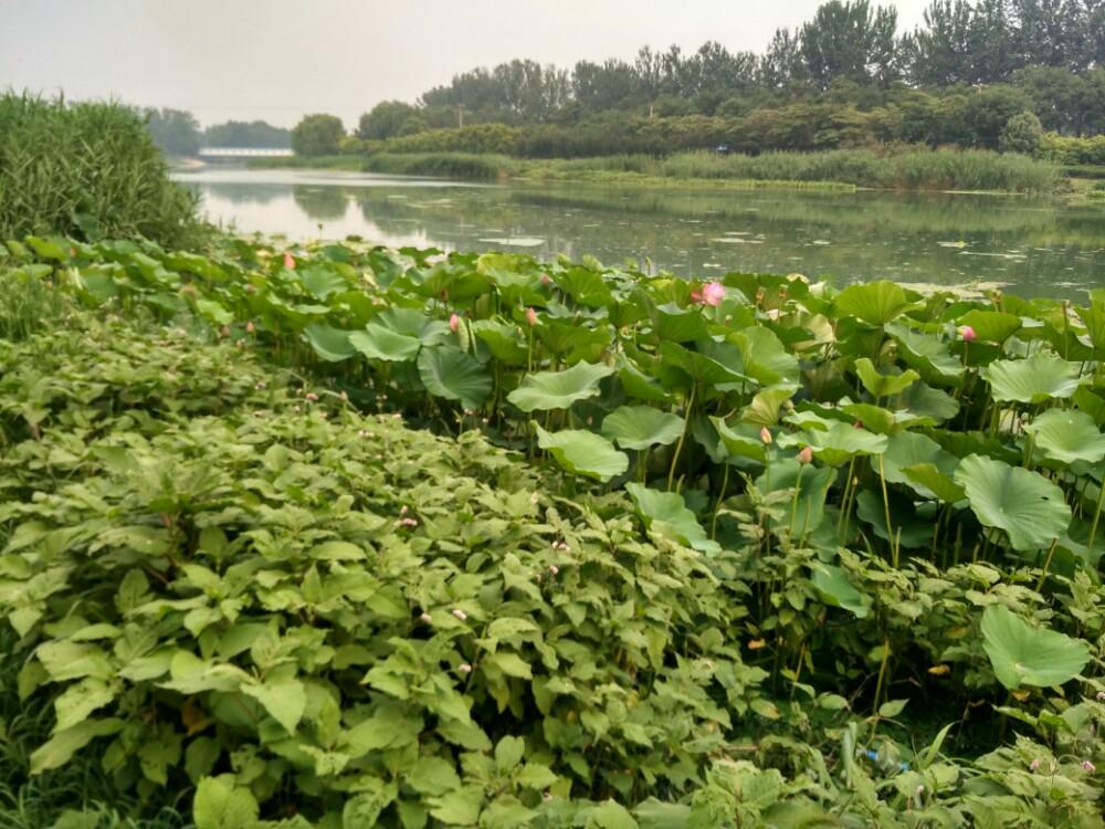 运河湿地公园