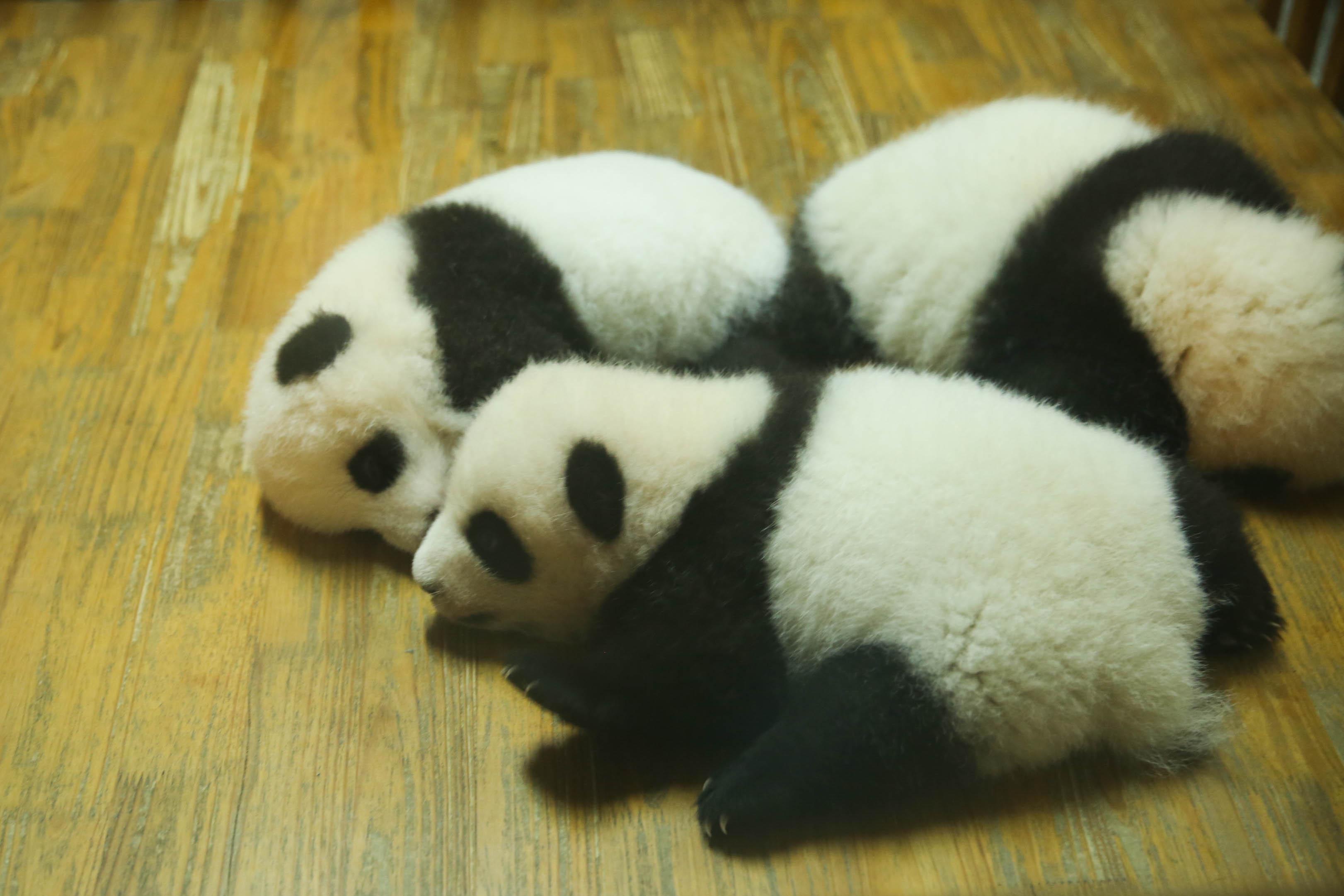 建议路线熊猫宝宝-大熊猫-小熊猫-黑天鹅,所以直奔月亮宫不走回头路.