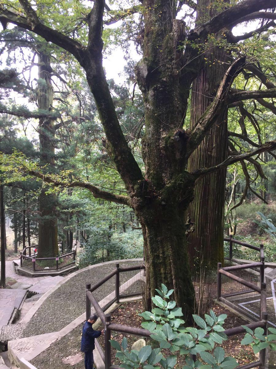 去三宝树也有两种走法,一是从电站大坝走,另一种是从芦林大桥走。两种走法走的是同一条路,也就是说方向不同而已,但是前者是上行,后者是下行,相比之下省太多力了。而且反正咱是有车坐的人,不怕坐着车稍微兜下圈~从美庐坐车在芦林大桥下,能看到一条下行的楼梯,就是前往三宝树的。不确定的同学也可以问下人哈~沿着楼梯一直往下走,还蛮多的,想象一下这些楼梯如果换成向上爬该多么痛苦下完楼梯就是铺好的石板路了,两旁都是茂密笔直的松树,偶尔能看到一两件艺术品。树林里走十几分钟先到达黄龙寺。看起来很新的一个寺庙,应该修建的时间并