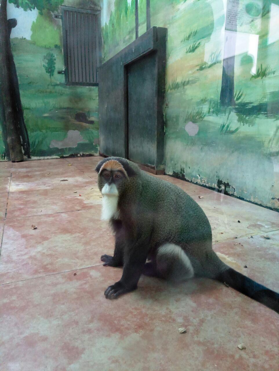猩猩馆里就两只猩猩了,动物还是少了些,也不怎么与人互动.