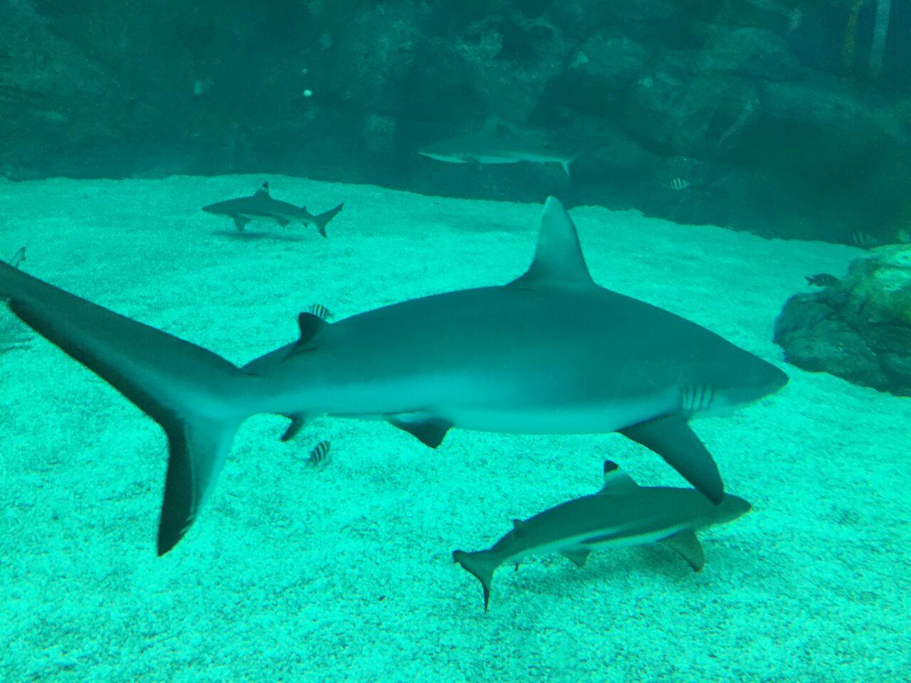 里面有展览,各种稀奇的海洋动物和一些有趣的小吃.
