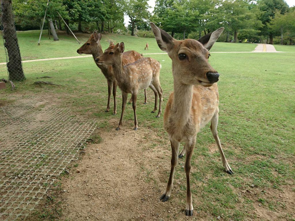 发现动物公园景点