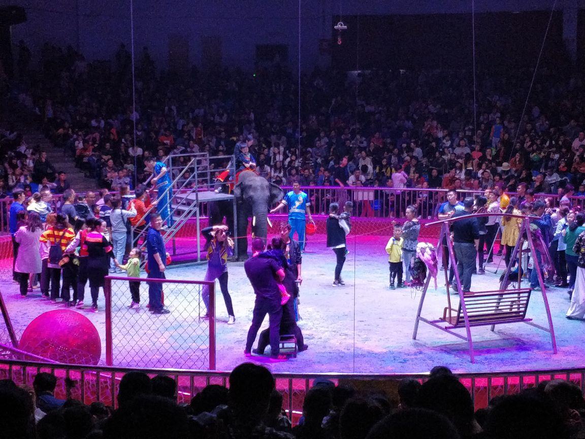 马戏团非常大,喜欢这个动物园.