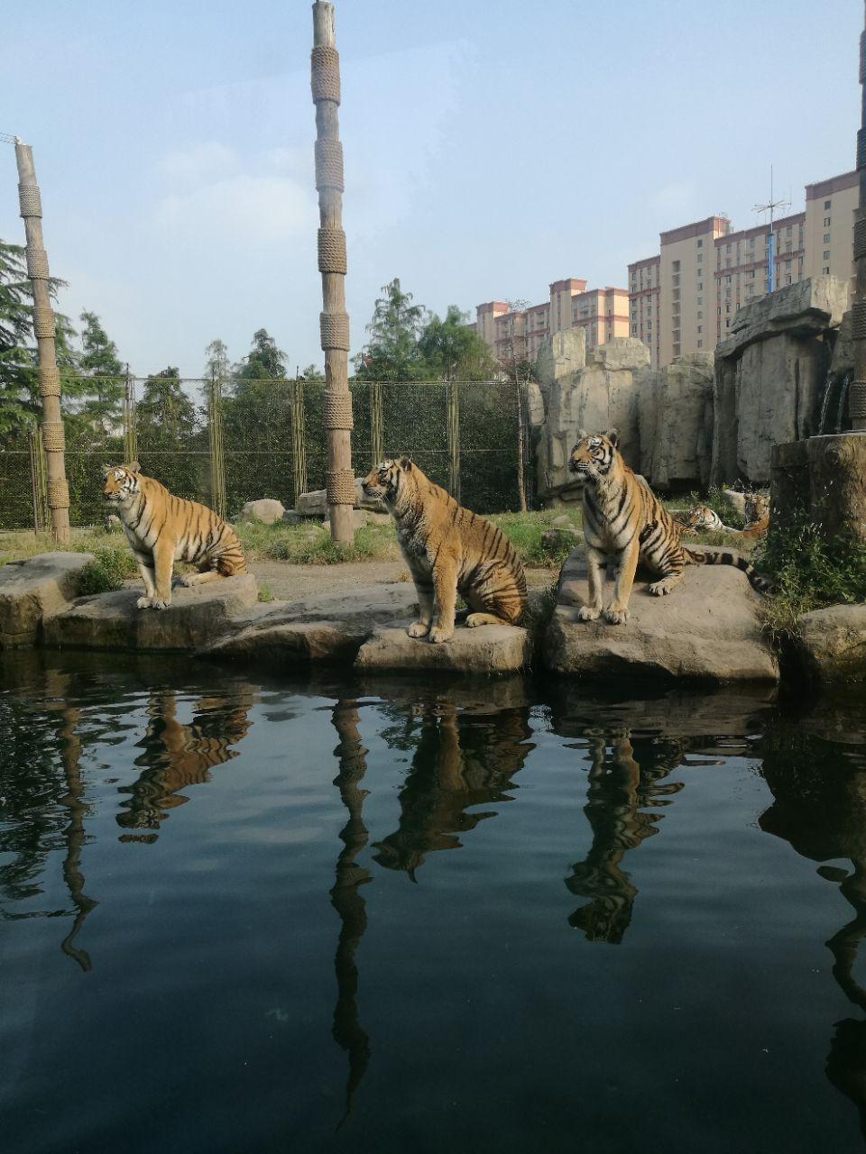 2019上海野生动物园_旅游攻略_门票_地址_游记点评