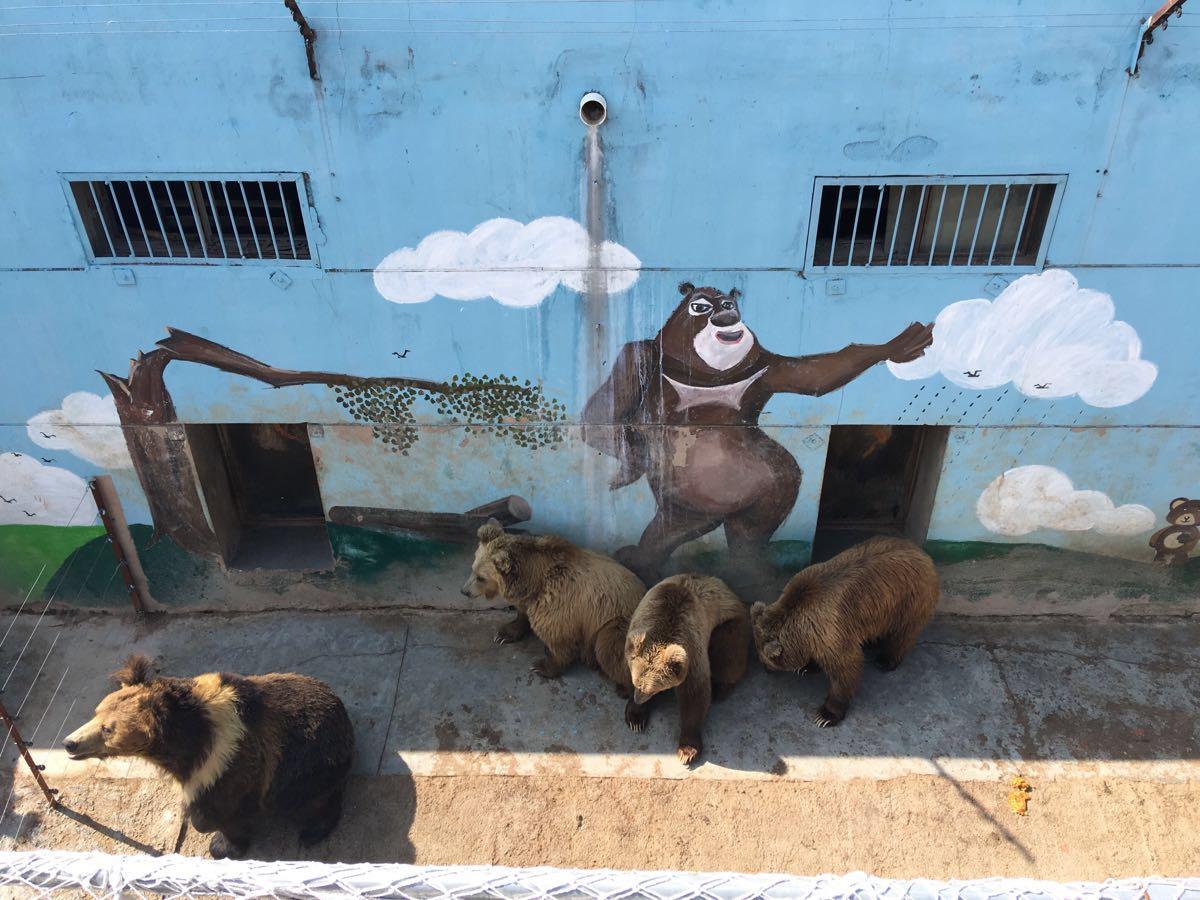 【携程攻略】青海西宁青藏高原野生动物园好玩吗