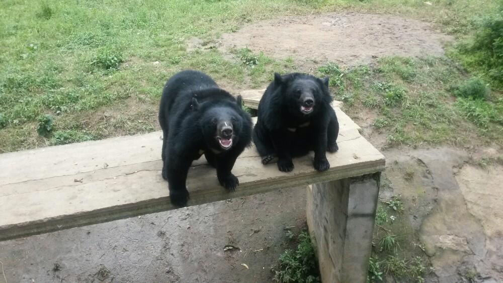 【携程攻略】湖北武汉九峰森林动物园好玩吗
