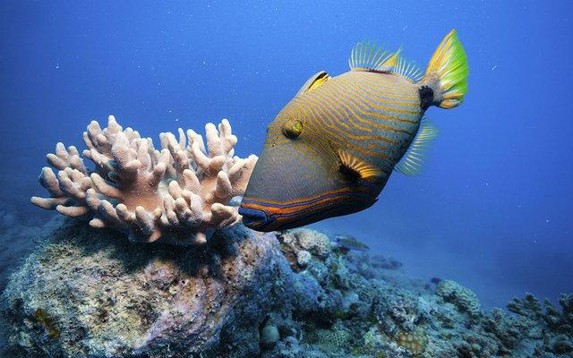 海底1百万米生物图片
