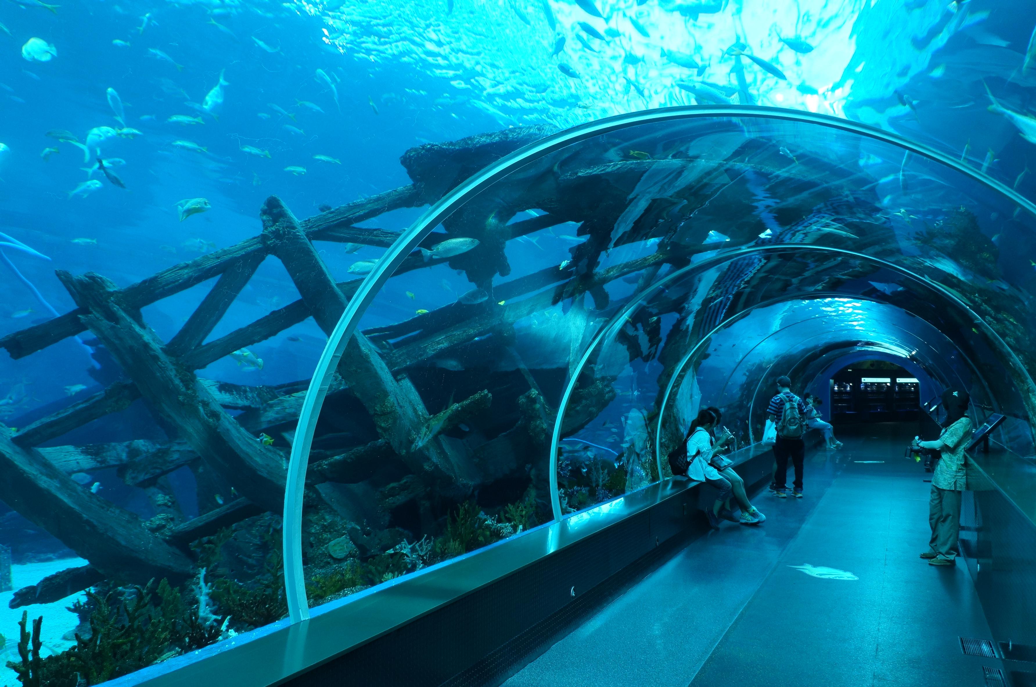 海洋馆外的巨大玻璃窗让游客先睹为快的看到了海底世界的景致,除了游弋的各种鱼类和造型的各种珊瑚,这里还有巨大的沉船。如此的场景布置在曾经游览过的水族馆中还不曾见过,这时才体会到这里真正的是海洋馆,而不是水族馆。在门口的宣传影视片中,一句来自海洋的声音在告诫我们:大自然不需要人类,而人类离不开大自然。当我们在观赏来自海洋的动植物的时候,还真得认真思考这句震撼心灵的话语。走进熟悉造型的海底隧道,在观赏鲨鱼的过程中开始游览。整个海洋馆分区域介绍世界各地著名的海洋流域和鱼类生物,通道两侧的设计和布置都