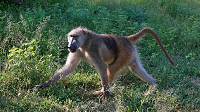 博兹瓦纳,乔贝河上的动物生存法则