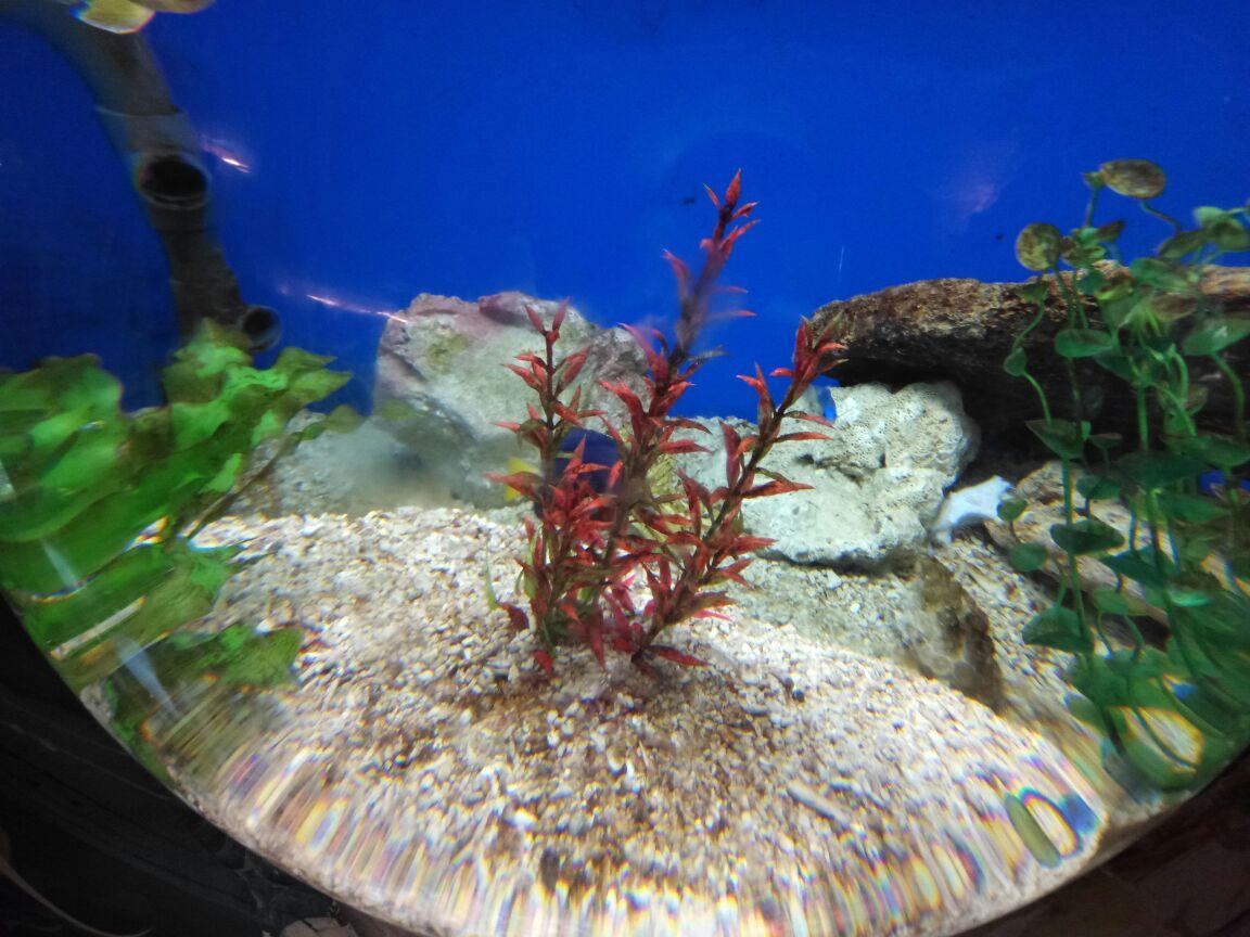 壁纸 动物 海底 海底世界 海洋馆 水族馆 鱼 鱼类 1152_864