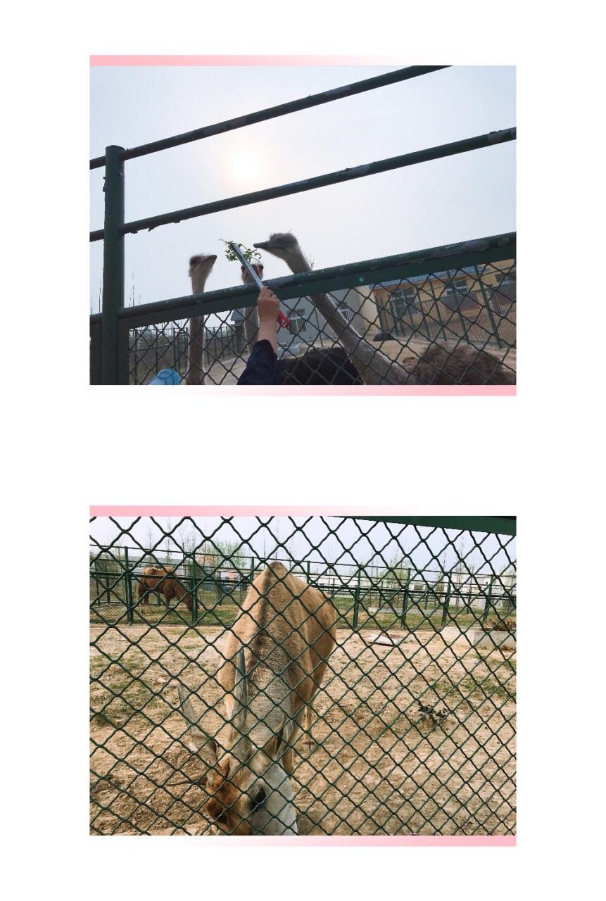 宿迁运河湾森林动物园攻略,宿迁运河湾森林动物园门票