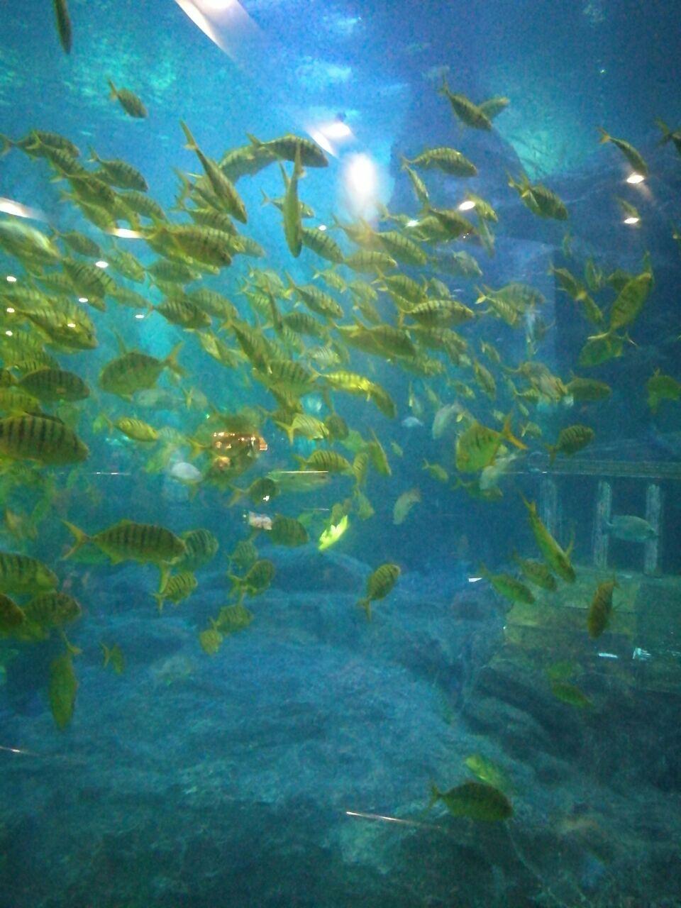 壁纸 海底 海底世界 海洋馆 水族馆 桌面 960_1280 竖版 竖屏 手机