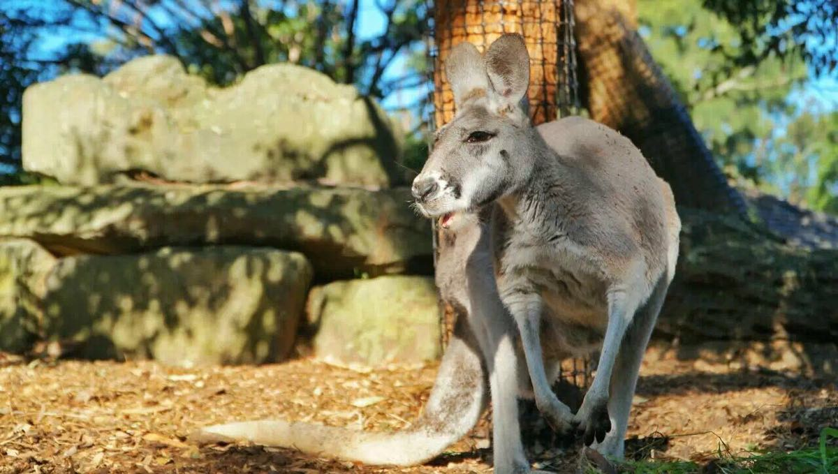 悉尼旅游攻略指南? 携程攻略社区! 靠谱的旅游攻略平台,最佳的悉尼自助游、自由行、自驾游、跟团旅线路,海量悉尼旅游景点图片、游记、交通、美食、购物、住宿、娱乐、行程、指南等旅游攻略信息,了解更多悉尼旅游信息就来携程旅游攻略。