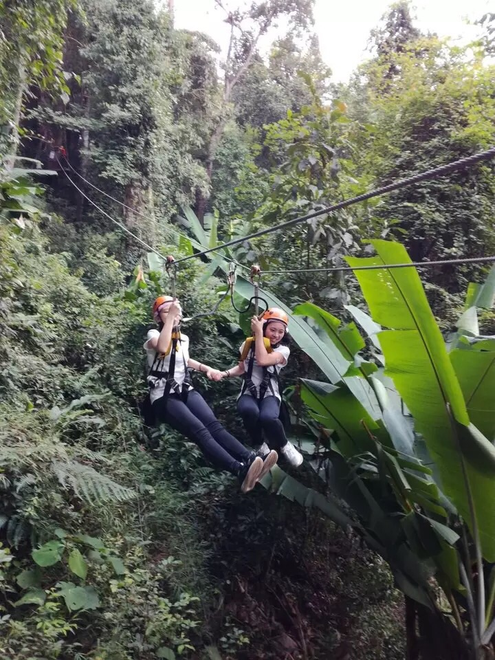 tree top adventure park飞越丛林图片